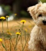pet-shop-evosmos-TOULIAS-PET-SHOP-HEADER